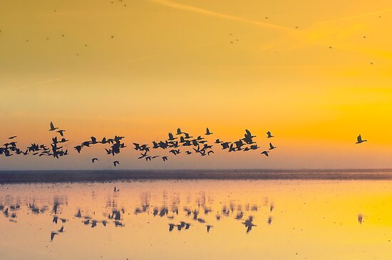 Sunrise in polder by THHoang