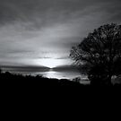 Magical Evening in Black & White by Dawn di Donato