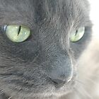 My Amazing Wonderful Little Cat (2) by Susan  Morry