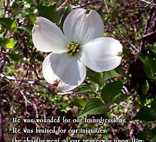we are healed - - Easter dogwood by WalnutHill