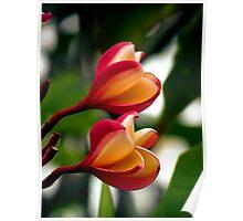 Hawaiian Orchid Poster