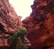 Canyon Tree 2 by BoddyHiker