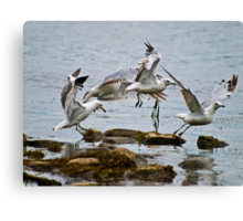 Seagulls Taking Off Canvas Print