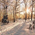 GOLDEN WINTER MORN 1 by NatureGreeting Cards ccwri