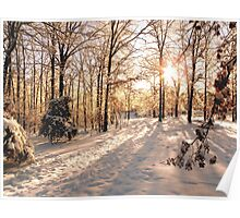 GOLDEN WINTER MORN 1 Poster