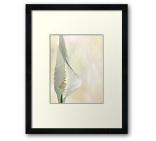Peace Lily 1/2 Framed Print
