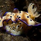 Nudibranch by Todd Krebs