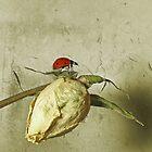Ladybug by Lifeware