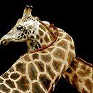 Giraffes In Love by Bobby McLeod