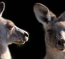 Kangaroo Profile by Tainia Finlay