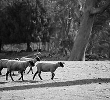 farmscapes #19, the delegation by stickelsimages