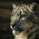 Snow Leopard Portrait by George Wheelhouse