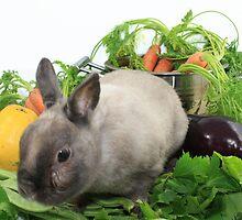 Rabbit with Vegetables by KERES Jasminka