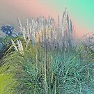 Pampas Grass in Pastel Colors by MotherNature