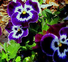 Purple by Sandy Dunn
