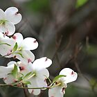 Dogwood Tree by DebbieCHayes