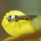 Spring fly  by Barbara Anderson