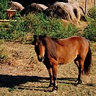 Mini Horse by Dawn di Donato