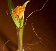 Yellow Tulip blossom by Ondřej Smolka