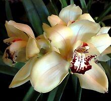 *White Cream Orchid* by DeeZ (D L Honeycutt)