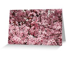 Spring Tree Blossoms Pink Flowering Trees art Baslee Troutman Greeting Card