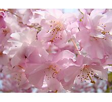 Floral Spring Flowers Landscape Fluffy Pastel Blossoms Baslee Troutman Photographic Print