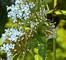 Bumble Bee on Duty by Margie Avellino