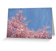 Spring Bright Blue Sky Floral art Pink Tree Blossoms Baslee Troutman Greeting Card