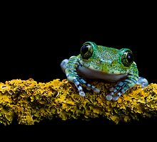 My friend the Peacock frog by AngiNelson