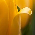 Yellow Tulip by Hege Nolan