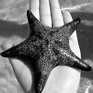 Starfish.  by Samantha  Goode
