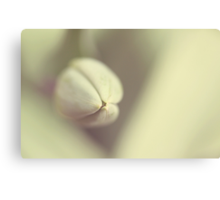 Tulip and Heart Canvas Print