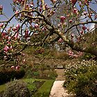 Spring Blossoms at Cotehele by moor2sea