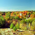 Connecticut Fall Foliage by Alberto  DeJesus