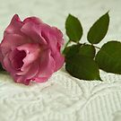 Old fashioned rose by Margaret Whyte