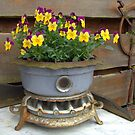 Violets in an old oil stove. by Hans Bax