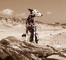 Dalmatian Dog Ready for Take Off by lisa hartman