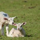 Lend Me Your Ear by Mairead1