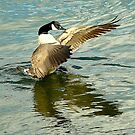 Canada Goose by Meladana