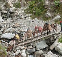 Mule Train by Phil Parkin