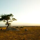 Sunsetting on the Lone Tree by KellieJayne