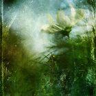 Experimental Garden Cosmos by Carina514