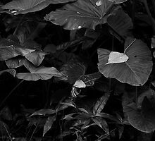 Rainforest in Black & White by Barbara Burkhardt