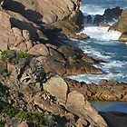 Tree at Sugarloaf Rock by Leonie Mac Lean