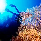 Sea Fan 2 by Dawn Eshelman