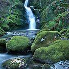 Dolgoch Falls, Wales by Bob Culshaw