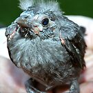 Fledgling by T. Victor