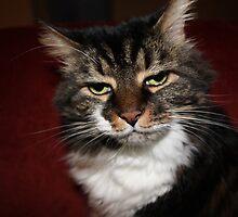 Kitty No Like Flashy by Jennifer Rhoades