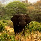 Elephant In The Bush by Robbie Labanowski