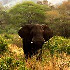 Elephant In The Bush by Robbie Labanowski